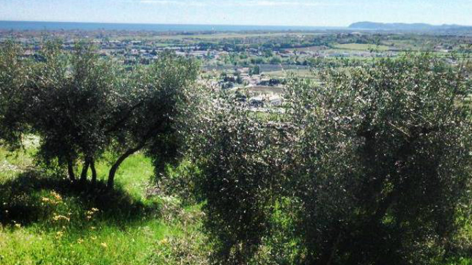 view from Covignano hill