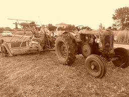 Festa della trebbiatura - Traditional folk festival dedicated to the threshing