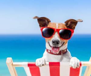 Rimini dog friendly beach