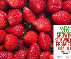 IX edizione International Strawberry Simposium 2021